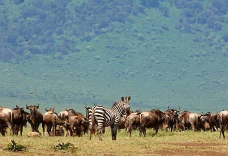 sunsafaris-5-andBeyond-serengeti-under-canvas.jpg