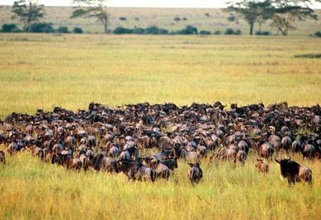 sunsafaris-8-andBeyond-serengeti-under-canvas.jpg