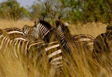 sunsafaris-9-andBeyond-serengeti-under-canvas.jpg