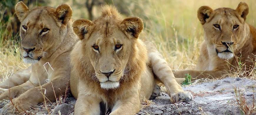 sunsafaris-3-andBeyond-serengeti-under-canvas.jpg