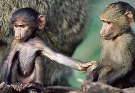 456f_serian-serengeti-north_monkeys.jpg