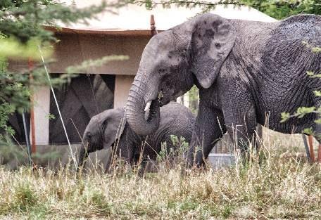 sunsafaris-3-serengeti-north.jpg