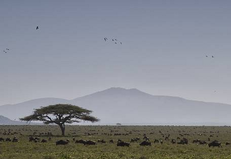 sunsafaris-4-serengeti-south.jpg