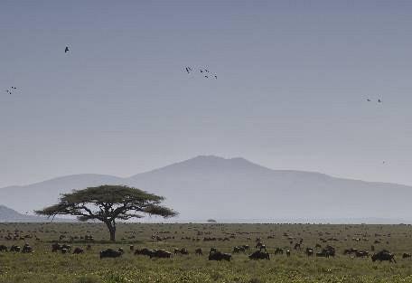 sunsafaris-4-serengeti-south.jpg