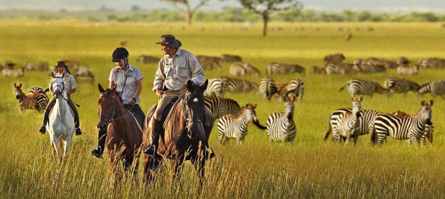 horse-safari.jpg