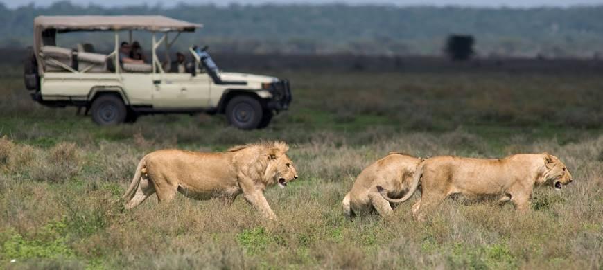 sunsafaris-1-tanzania-safari-operator.jpg