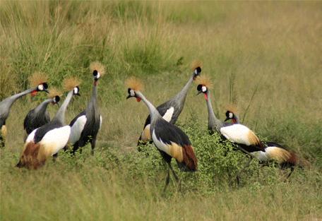 456b_uganda-safaris_birding.jpg