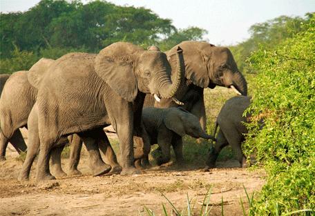 456d_uganda-safaris_uganda-.jpg