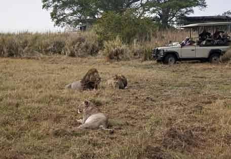 sunsafaris-2-zambia.jpg
