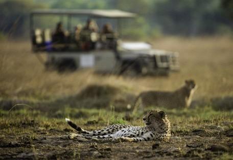 zambia-cheetah-drive.jpg