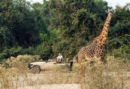 zambia-giraffe-drive.jpg