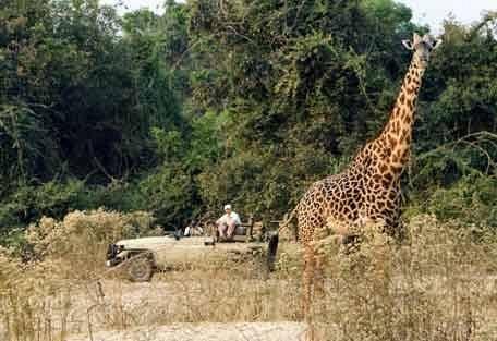 sunsafaris-12-zambia.jpg
