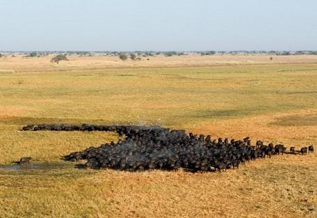 buffalo-aerial-wilderness.jpg