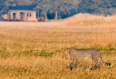 cheetah-lodge-wilderness.jpg