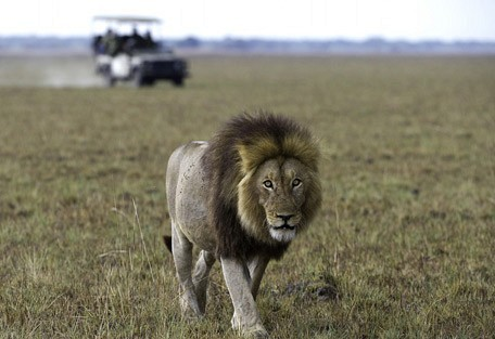 lion-game-drive-wilderness.jpg