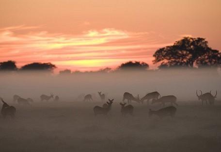 puku-herd-mist-wilderness.jpg