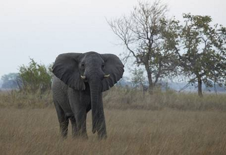 sunsafaris-3-kafue-safari.jpg