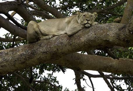 sunsafaris-5-kafue-safari.jpg
