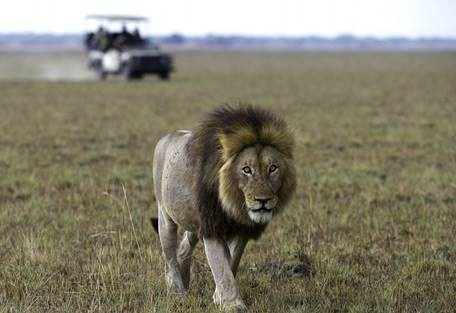 sunsafaris-6-kafue-safari.jpg