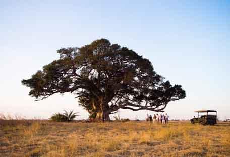 sunsafaris-busanga-plains-456-8.jpg