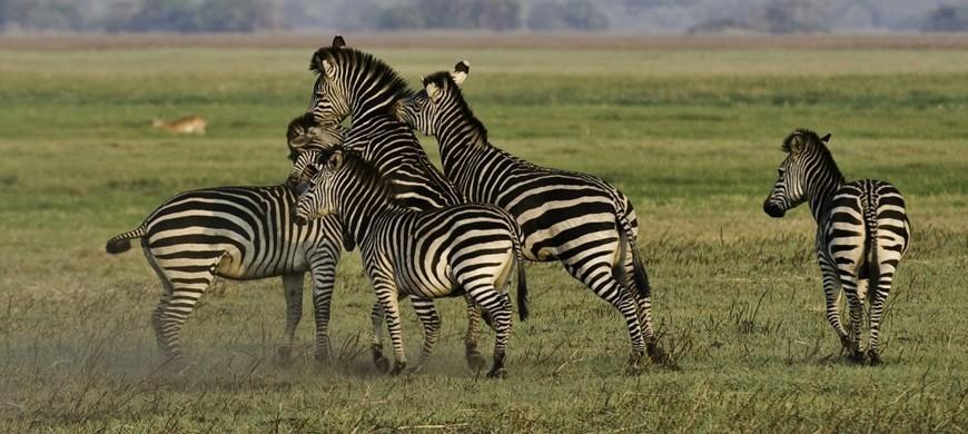 zebra-wilderness.jpg
