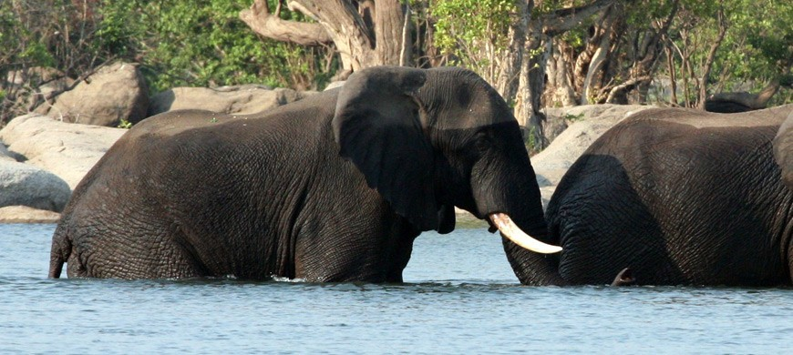 elephants-river.jpg