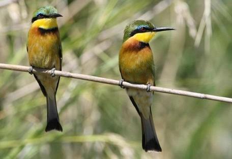bee-eaters.jpg