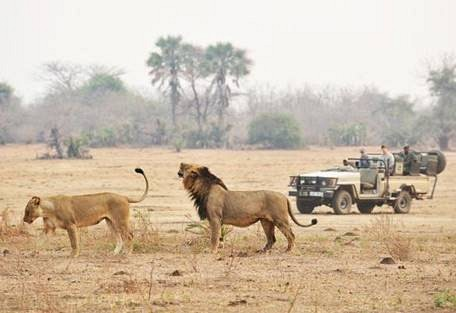sunsafaris-8-lower-zambezi-national-park-safari.jpg