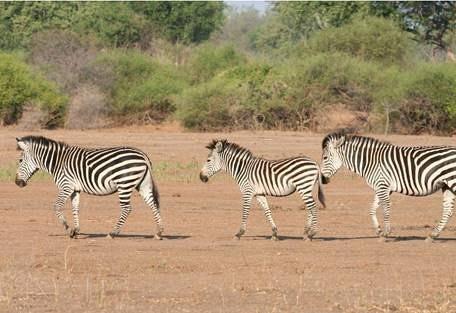 sunsafaris-9-lower-zambezi-national-park-safari.jpg