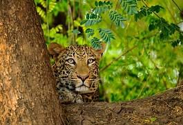 sunsafaris-1-royal-zambezi-lodge.jpg