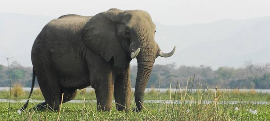 sunsafaris-3-lower-zambezi-national-park-safari.jpg