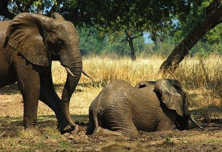 elephants-in-the-mud.jpg