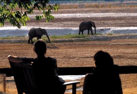 elephant-rps4.jpg