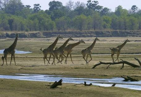 sunsafaris-3-south-luangwa-national-park.jpg