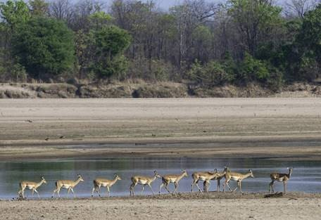 sunsafaris-4-south-luangwa-national-park.jpg