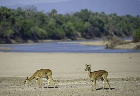 sunsafaris-7-south-luangwa-national-park.jpg