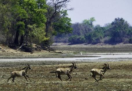 roan-wilderness.jpg