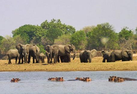 elephants-hippos-wilderness.jpg