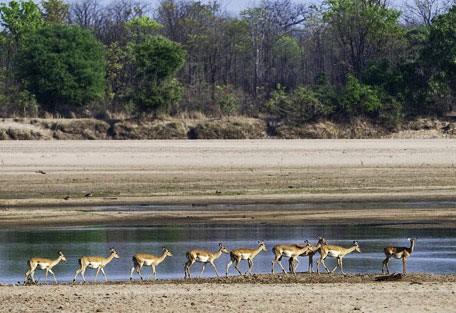 impala-wilderness.jpg