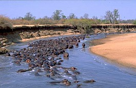 08-hippos-abound-in-the=changwa-channel.jpg