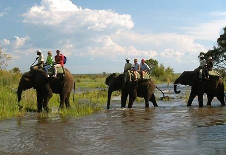 zambia-elephant-back-wilder.jpg