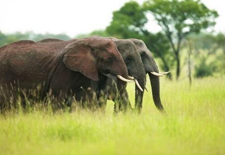 zimbabwe-elephants.jpg