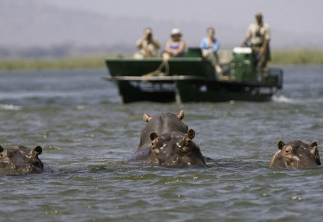 zimbabwe-hippos-boat.jpg