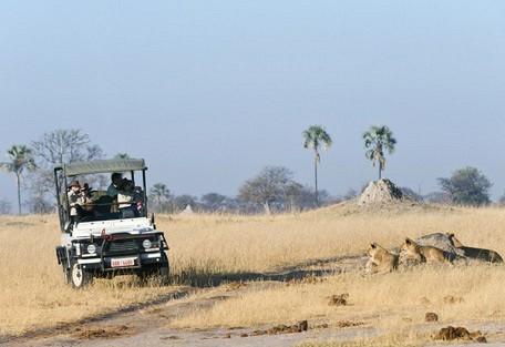 zimbabwe-lioness-drive2.jpg