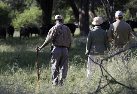 zimbabwe-buffalo-walk.jpg