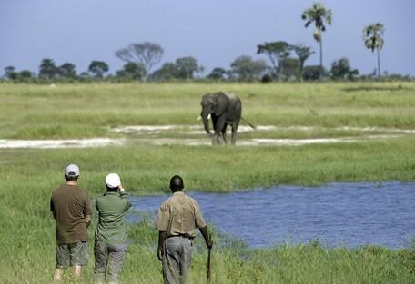 zimbabwe-elephant-walk.jpg