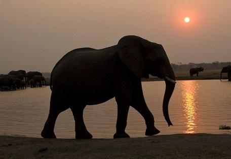 elephant-dusk.jpg