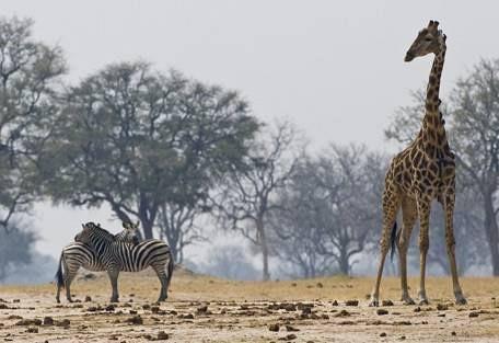 sunsafaris-2-hwange-national-park-zimbabwe.jpg