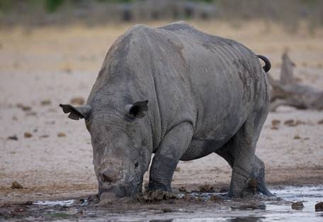 sunsafaris-3-hwange-national-park-zimbabwe.jpg