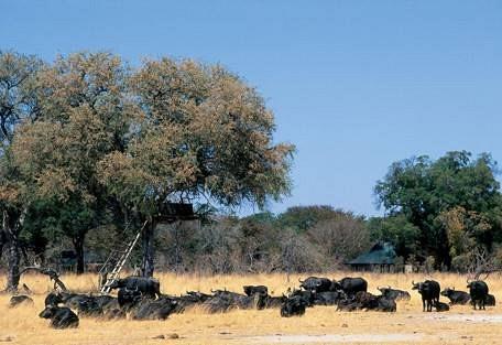 sunsafaris-4-hwange-national-park-zimbabwe.jpg